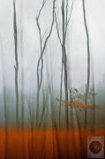autumn-mist-valda-bailey-(copia)